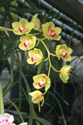 Download Canon 60D Orchids Oct2019 002