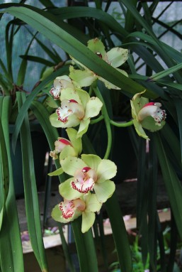 Download Canon 60D Orchids Oct2019 010