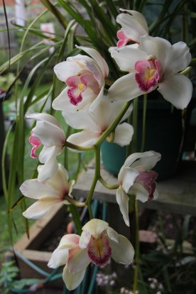 Download Canon 60D Orchids Oct2019 011