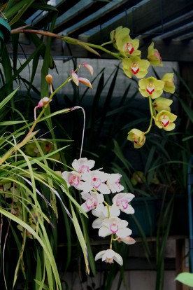 Download Canon 60D Orchids Oct2019 019