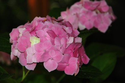 Download Canon60D Christmas Day flowers 021